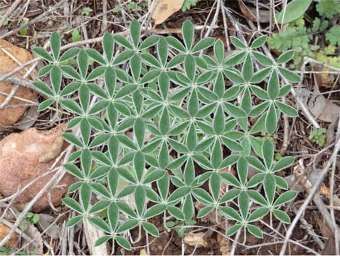 Meaning of the flower of life